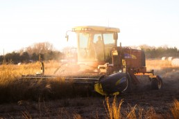 agribusiness sector.